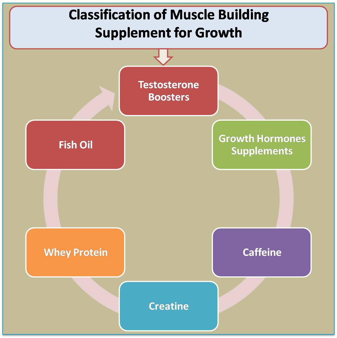 Classification of Muscle Building