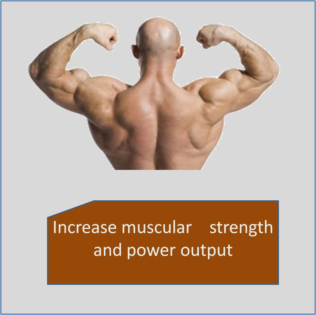 Increase muscular    strength and power output